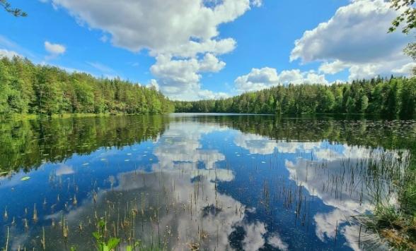 <次回の企画をお楽しみに!>【フィンランド】森のガイドPekkaさんと歩く白夜のヌークシオ国立公園オンラインツアー<8月10日限定/Zoom利用>