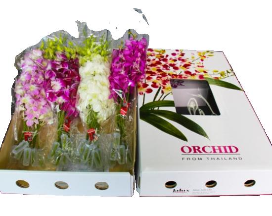 <日本配送>大切な方への贈り物にぴったり♪タイ産・フラワーギフト・ランの花詰め合わせ