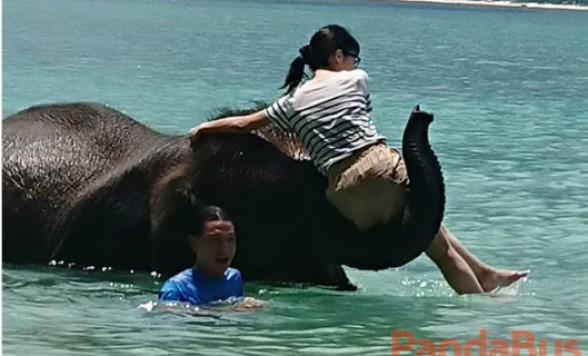 海で象乗り体験料込み!フォトジェニックツアー
