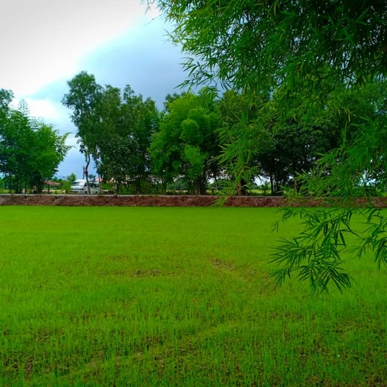 昔ながらの稲作体験