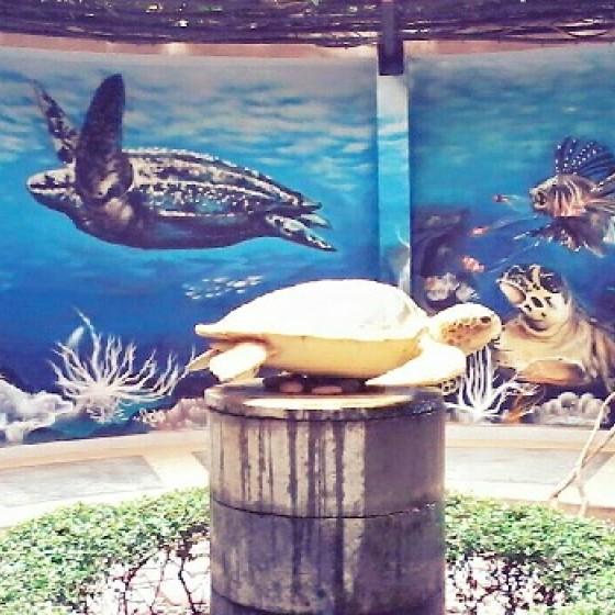 ウミガメ研究所