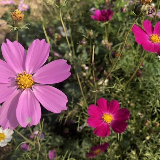 花畑イメージ
