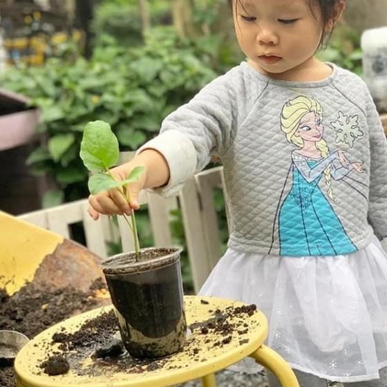 コーヒーマグに木を植える体験
