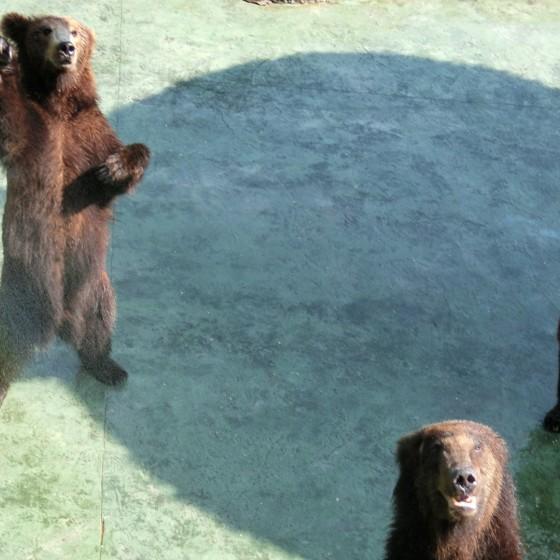 イメージ:深セン動物園