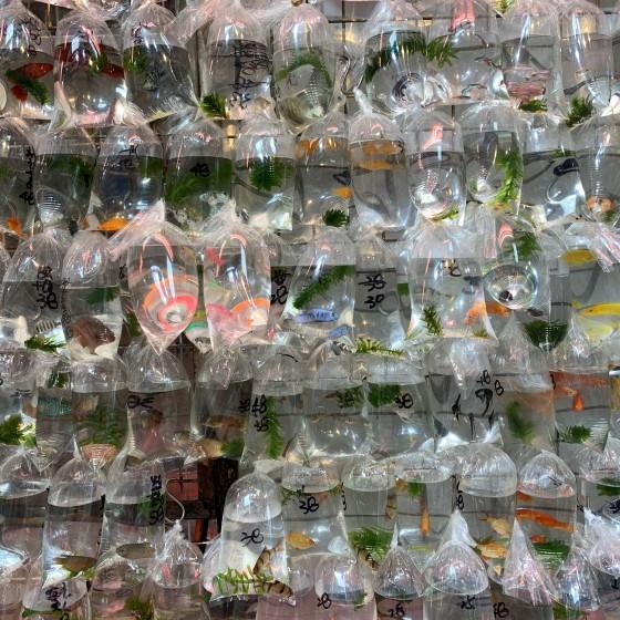 金魚街イメージ