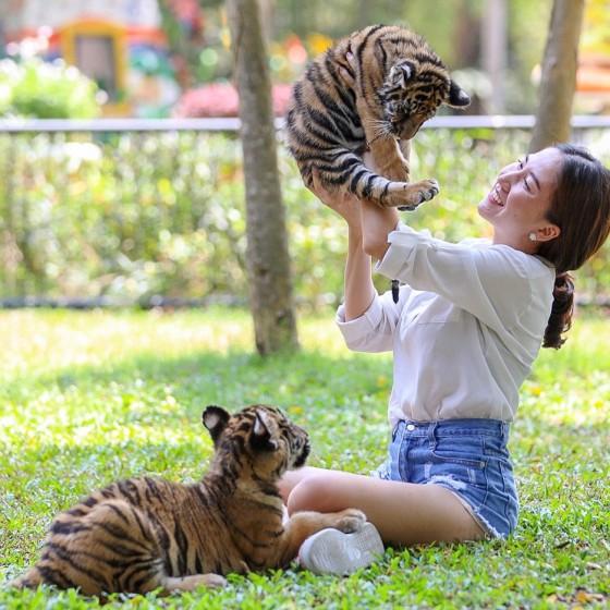 タイガーズー