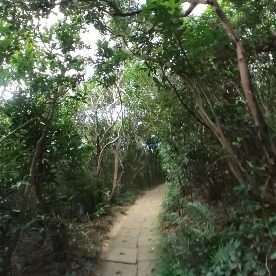 西高山(ハイウェストピーク)への道中
