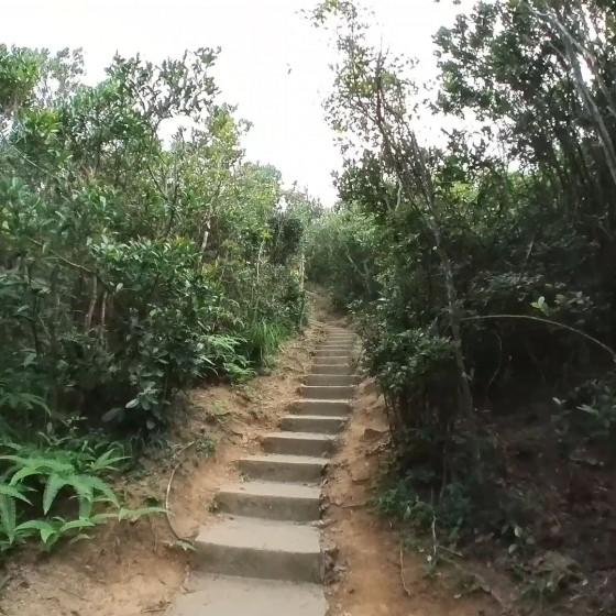 ハイウェストピーク(西高山)  登山道中