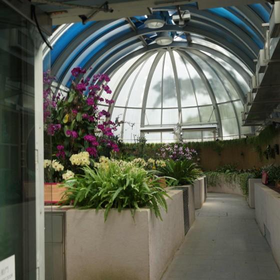 香港動植物公園 温室 サンプル