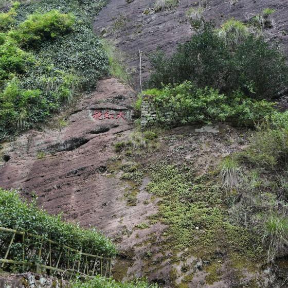 武夷山 大紅袍 イメージ