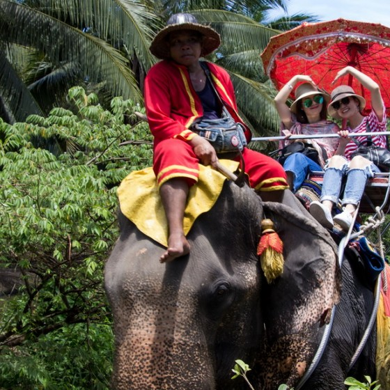 象乗り体験