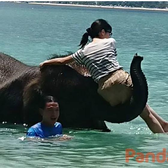 海で象乗り体験