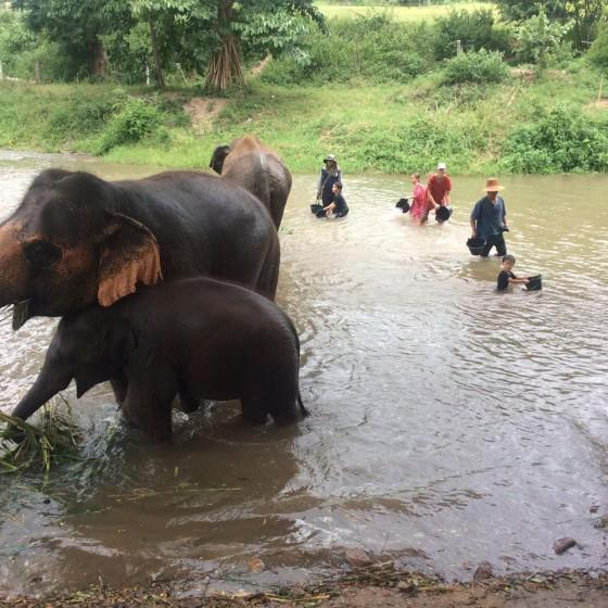 象と川遊び