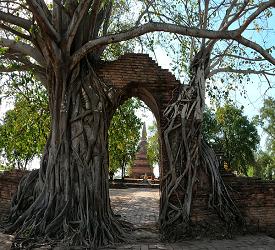 城門に木が根を張り、幻想的な風景を醸し出す「ワットプランガム」