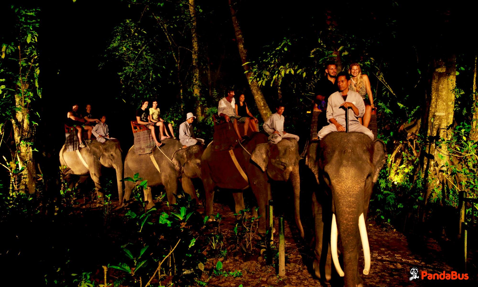 タロ村のエレファントサファリへ到着。 象に餌をあげたり、博物館を見学したりパーク内を散策します。