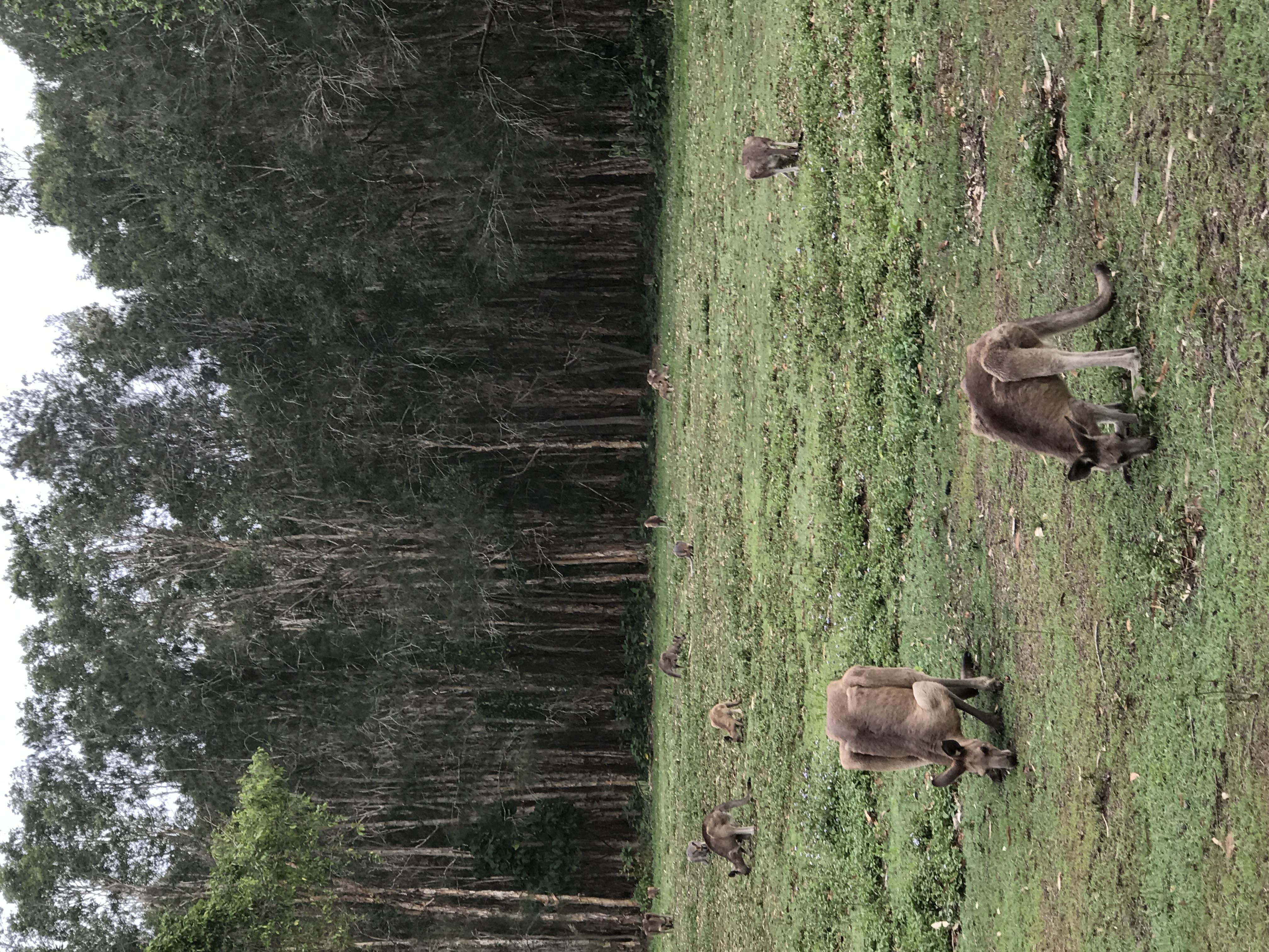 ゴールドコースト自然保護区訪問