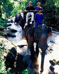川にも入る圧巻の本格的な象乗りトレッキング