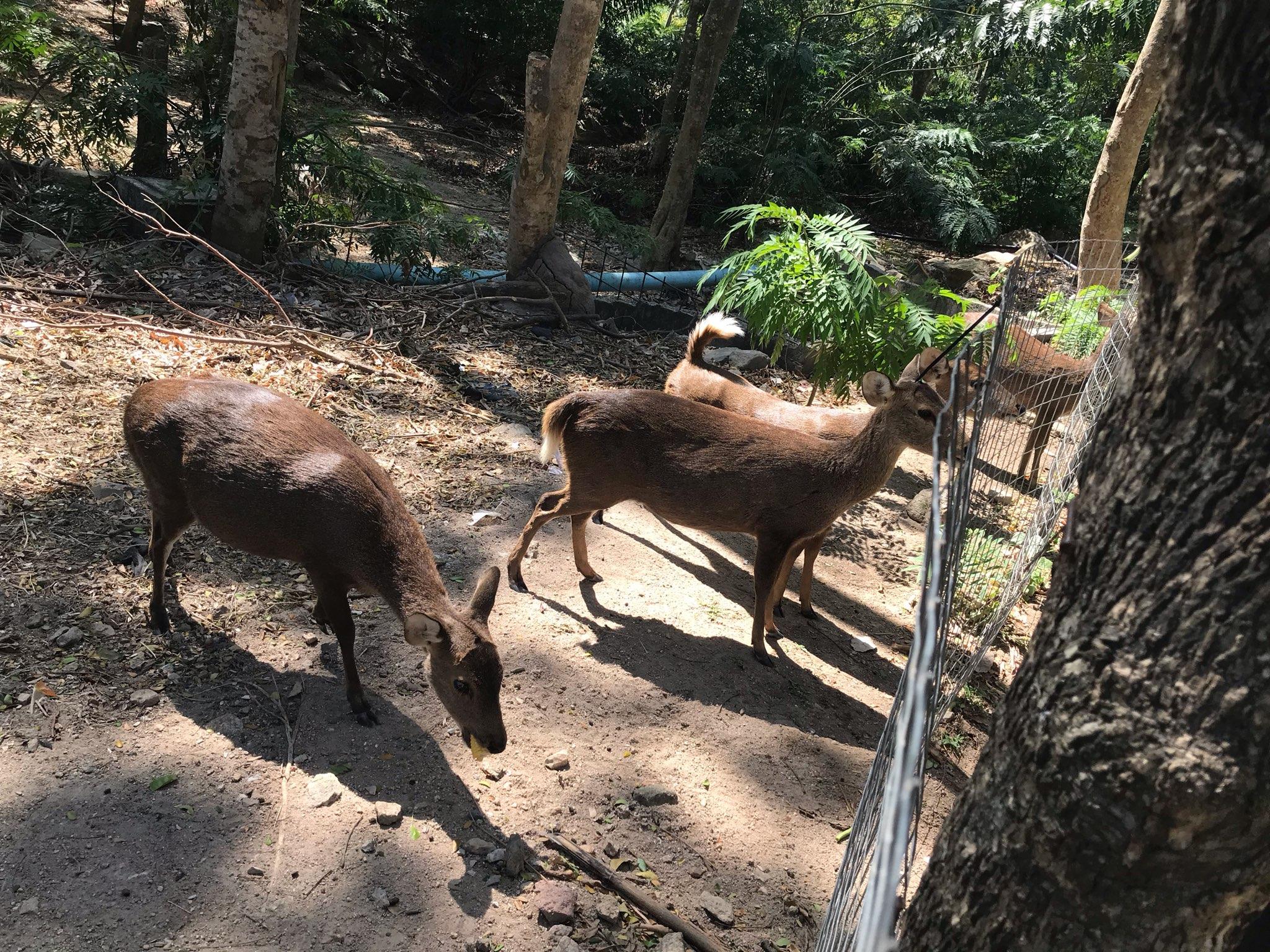 カオキアオ動物園ツアー