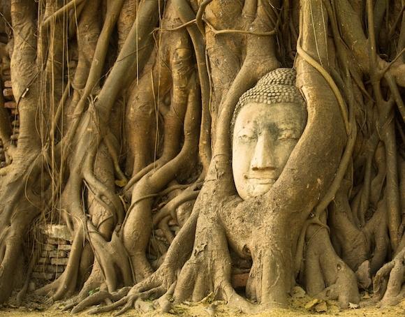 菩提樹に包まれた仏頭が残り、戦争の傷跡も感慨深い「ワットマハタート」
