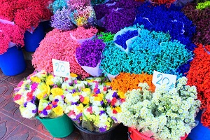 色とりどりの花が集まるパーククロン花市場の散策