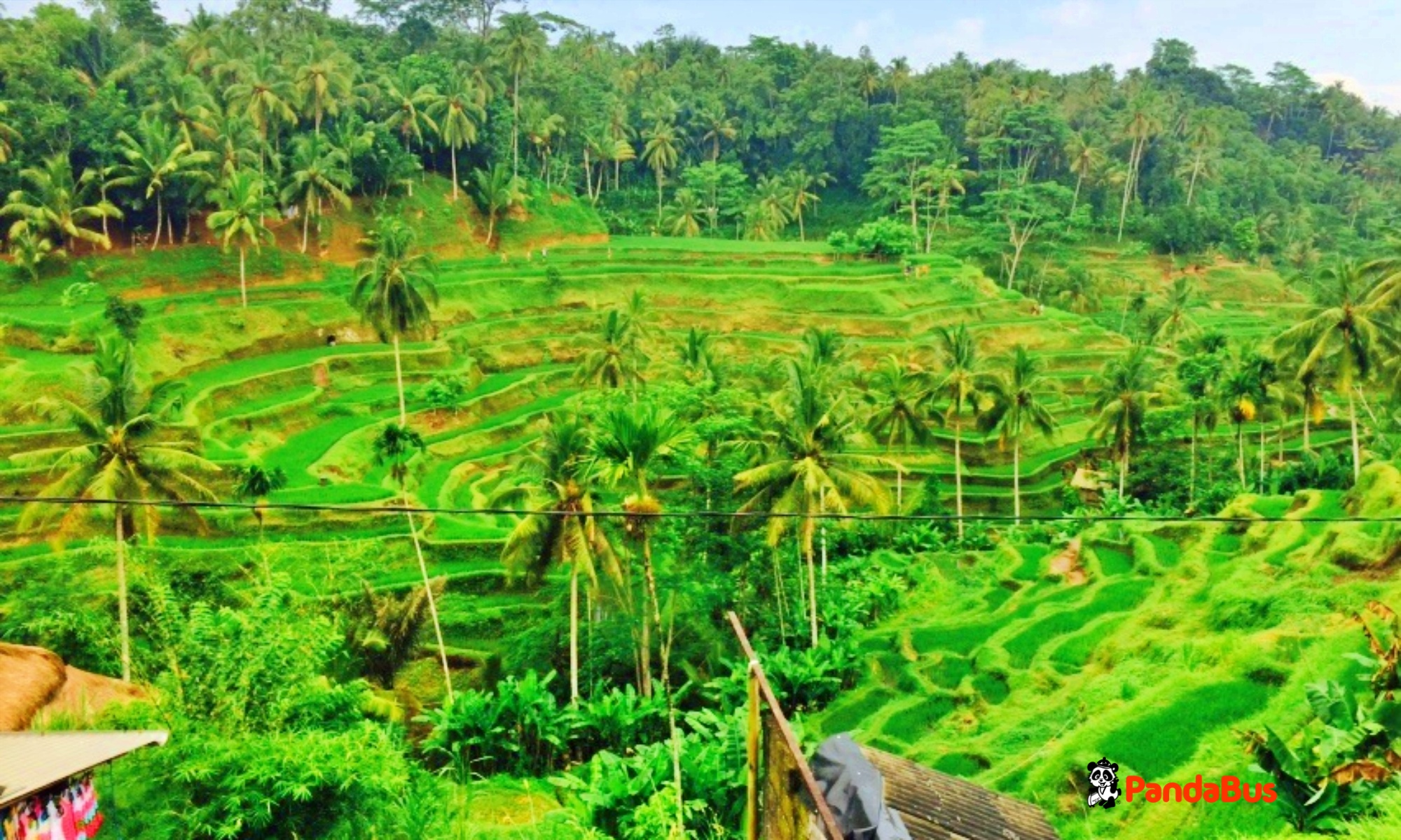 有名なテガララン棚田を眺めながら絶景ランチ(インドネシア料理)