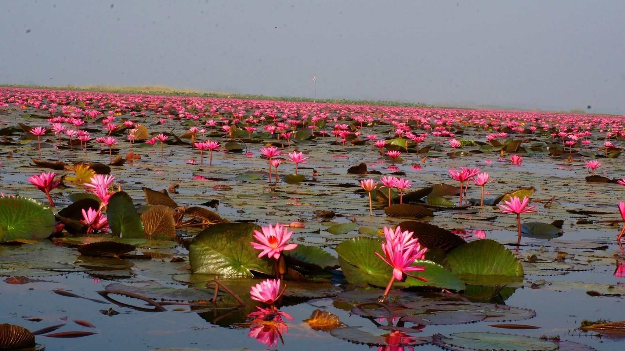 紅い睡蓮の海と呼ばれる湖「タレーブアデーン」到着
