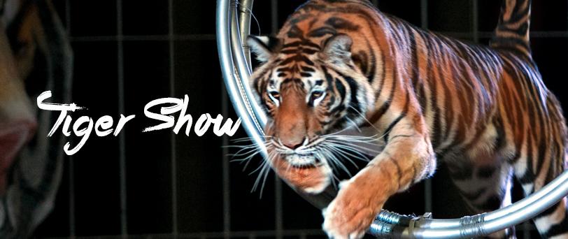タイガーショーのご案内