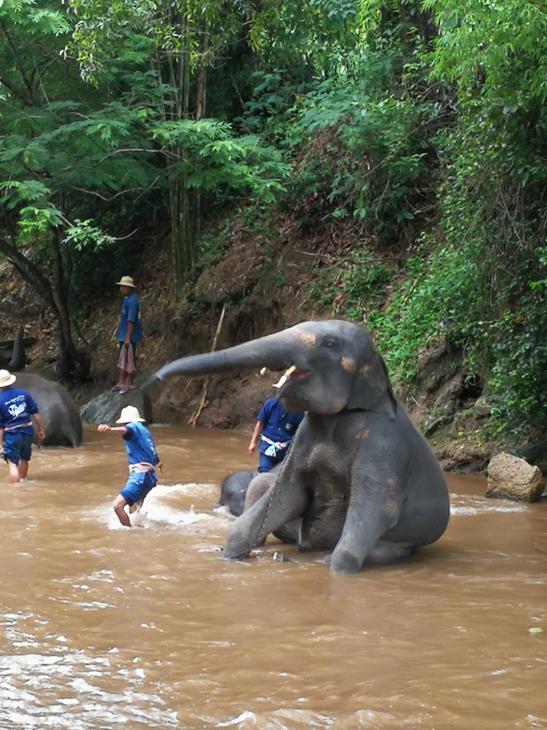 メーワンにあるエレファントファーム到着  象使い用のユニフォームに着替えて気分は象使い!? (川に入るので濡れてもいい下着あるいは水着を着用下さい)