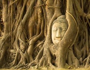 木の根に取りこまれた仏頭のある「ワットマハタート」