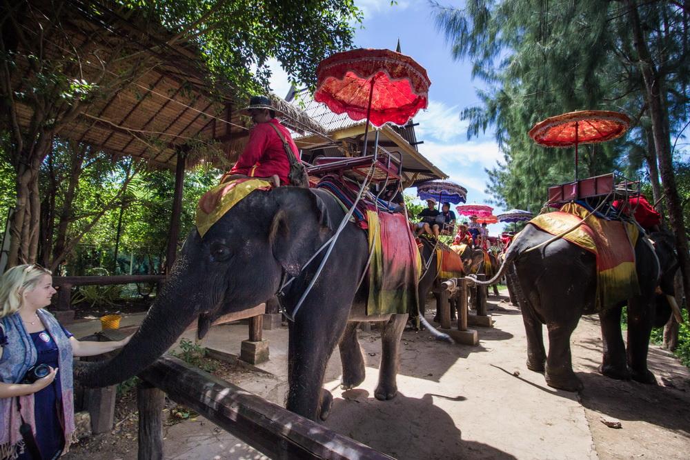 象園にご案内。本格的象乗りをお楽しみください。(約25分間)