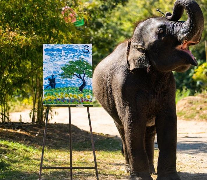 象の数々のパフォーマンスを見学後、象乗り体験