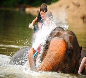 メーサーエレファントキャンプにご案内 (別料金で象にも乗れます)