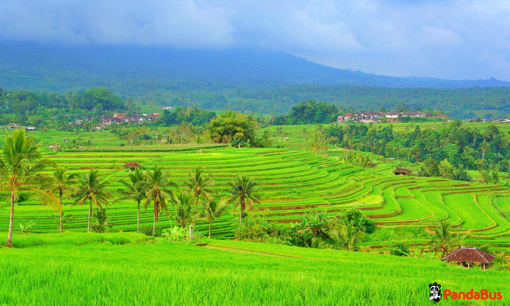 世界遺産『ジャティルイ(棚田)』見ながらインドネシア料理のご昼食 昼食後、ジャティルイ村散策