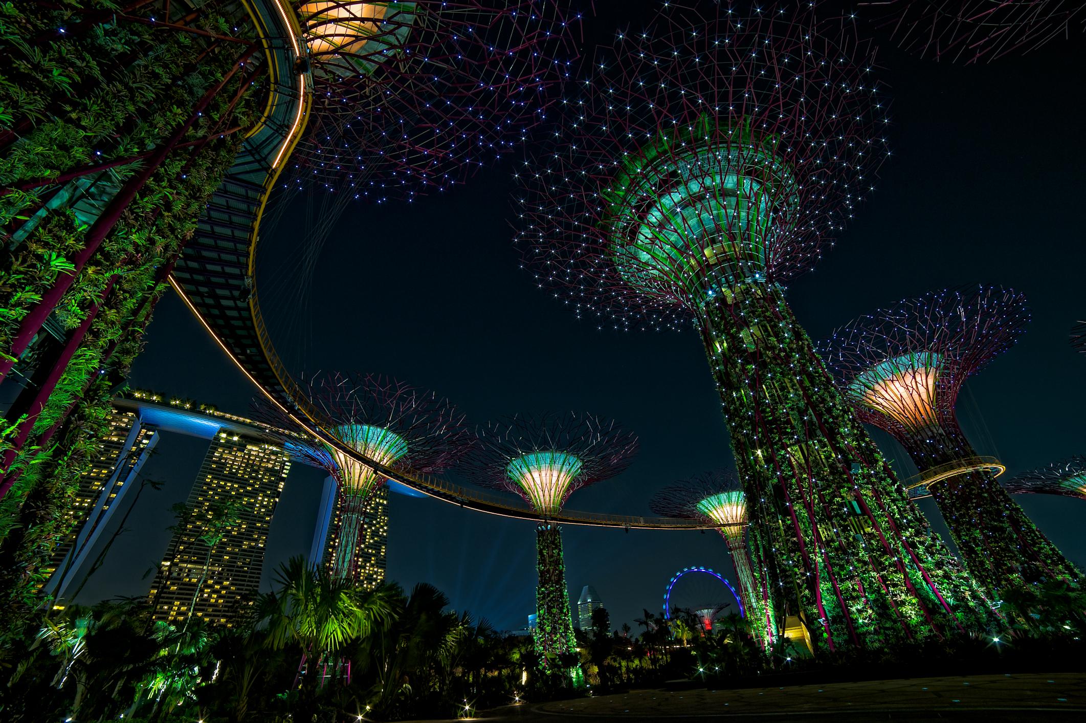 ライトアップされた近未来型植物園「ガーデンズバイザベイ」へご案内
