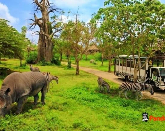 【バリ島/キャンペーン中】動物と触れ合おう!バリサファリ&マリンパーク 選べる4つのパッケージ