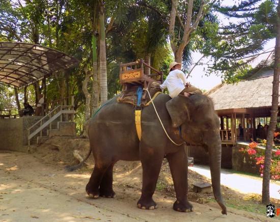 【バリ島】エレファントライド(象乗り)&ウブド観光<ランチ付き>