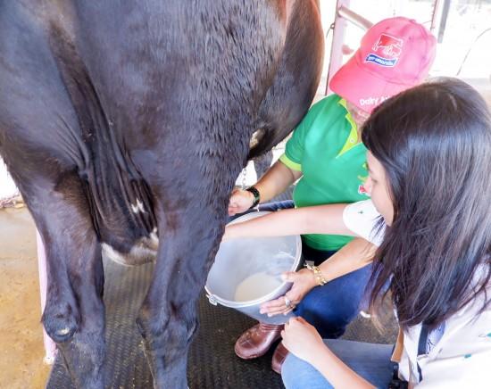 【期間限定!次回の催行をお楽しみに!】タイ・デンマークファーム体験ツアー<日本語ガイド/午前半日/昼食付き/牛へのミルクあげ・乳絞り>