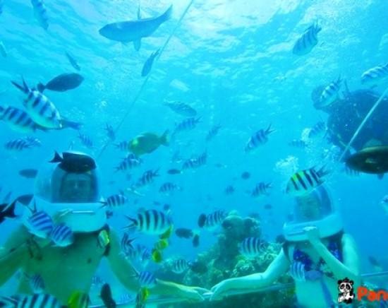 【バリ島】シ―ウォーカーで海中散歩!<往復送迎付き>