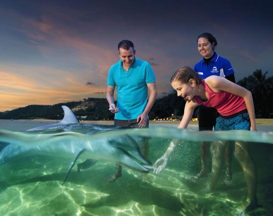 モートン島で野生のイルカに餌付け体験 選べる昼間のアクティビティプラン付きツアー<英語ガイド/イルカ餌付け/指定ホテル送迎>