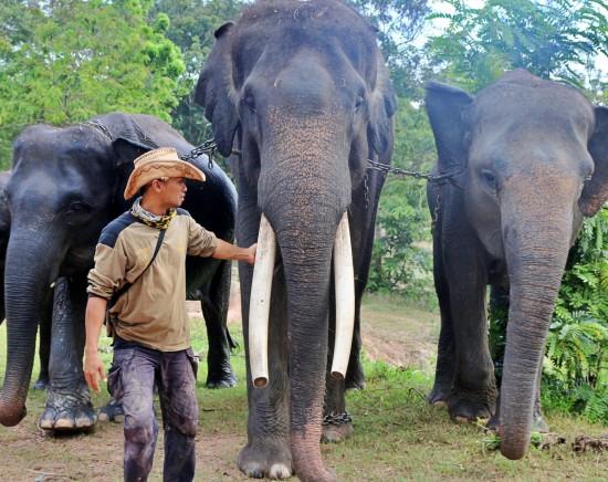 【ジャカルタ発】スマトラ島・ランプン象と触れ合う1泊2日