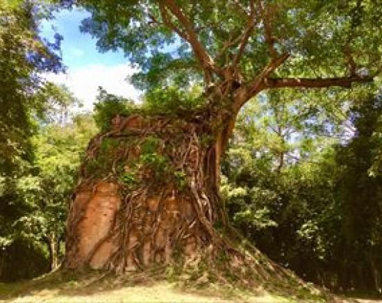 【シェムリアップ】秘境遺跡!大プリアカンと第3の世界遺産サンボー・プレイ・クック遺跡<ランチ付>