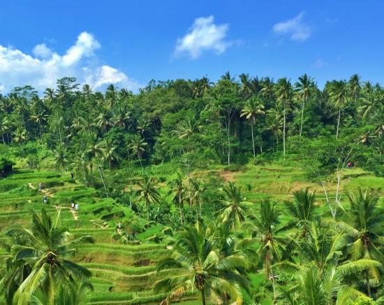 【ジャカルタ発】充実の観光付き!初めてのバリ島2泊3日