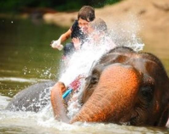 象使い体験+水遊び<英語ガイド/1日>