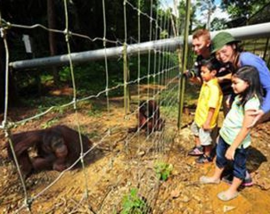 絶滅の危機のオラウータンを保護区で見学ツアー<日本語ガイド/オラウータン/半日/昼食あり>