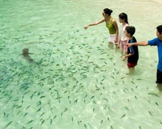 美しいパヤ島でシュノーケリングツアー<英語ガイド/パヤ島/お弁当あり>