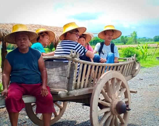 昔ながらの稲作体験&牛車乗り<英語ガイド/1日/タイ料理の昼食>