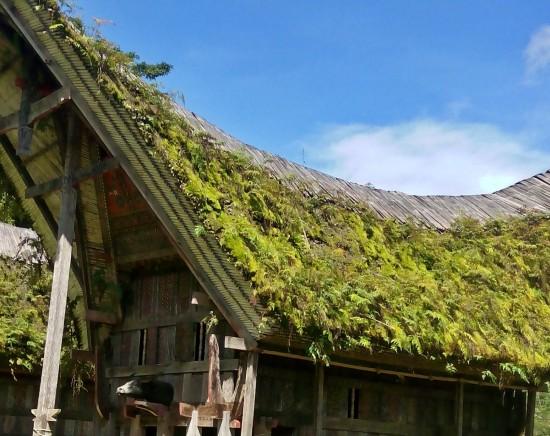 【ジャカルタ発】タナトラジャ文化に触れる スラウェシ島3泊4日