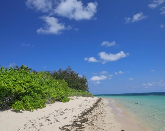 グリーン島の外まで満喫!グリーン島とアウターリーフツアー<世界遺産/グレートバリアリーフ/サンゴ礁/日本語ガイド/シュノーケリング>