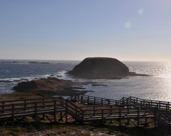 フィリップ島ペンギンパレード+ワイルドライフパーク観光ツアー<日本語ガイド/フィリップ島/夕食あり/指定ホテル送迎>