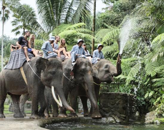 サファリパークで本格的な象乗り体験ツアー<送迎・ランチ付き>